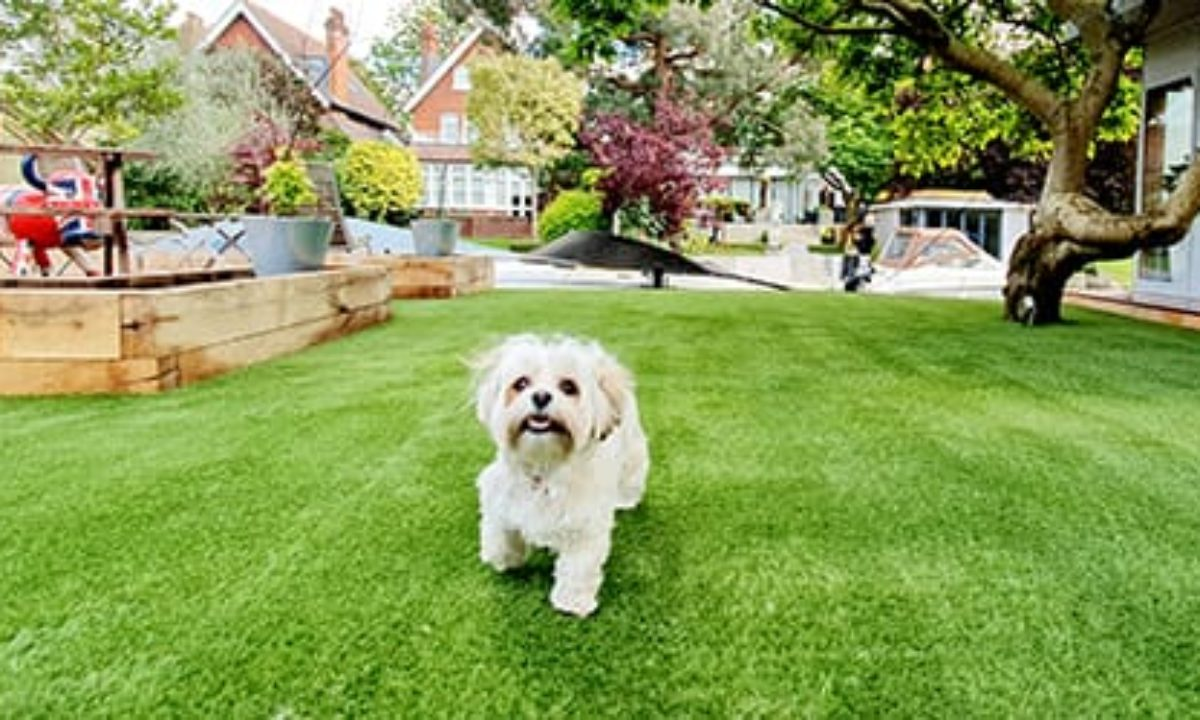 Artificial grass for pets & dogs - Easigrass East Riding
