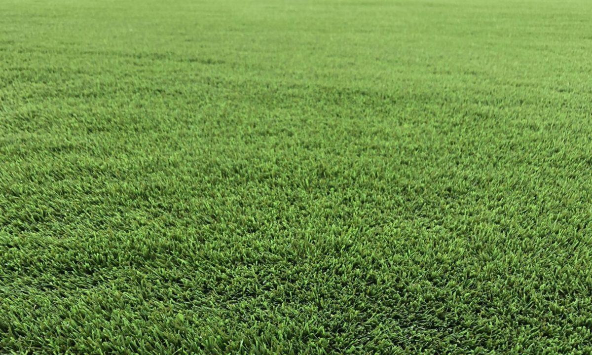 EasiPets Harrogate Artificial Grass 2